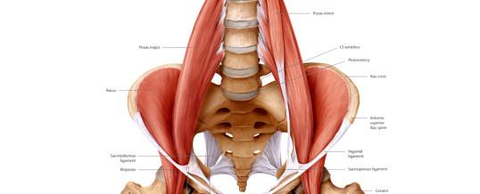 pijnscheuten bovenbeen